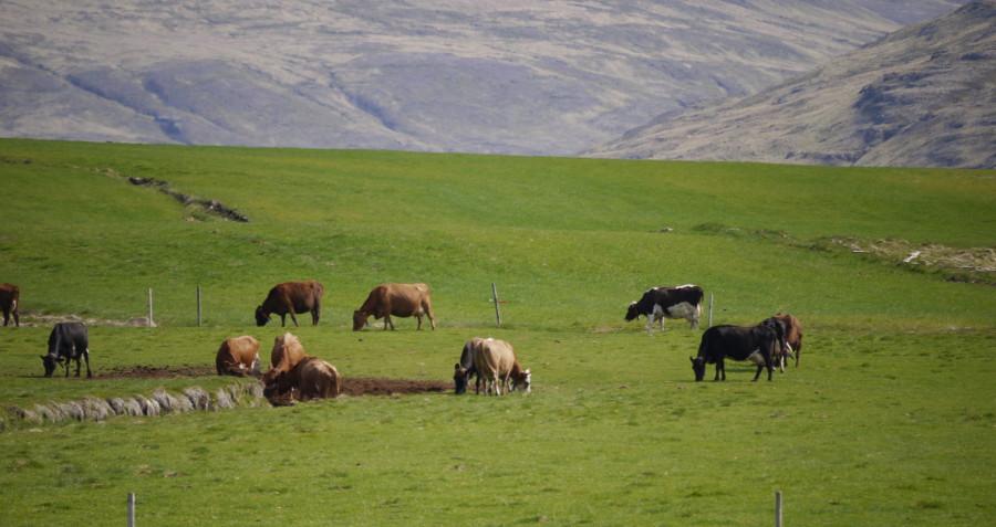 développement durable islande