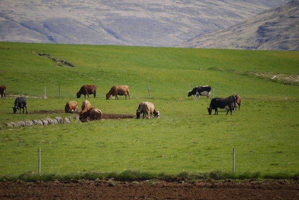 islande et développement durable