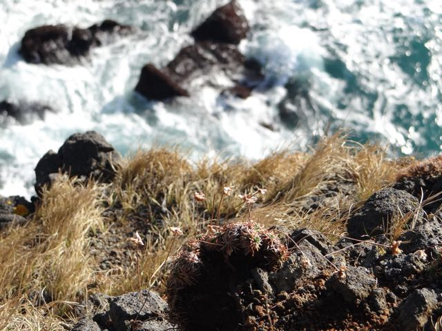 falaise islande