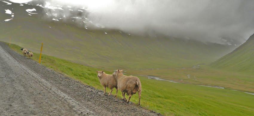 Tour Islande voiture