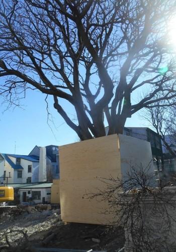 arbre reykjavik